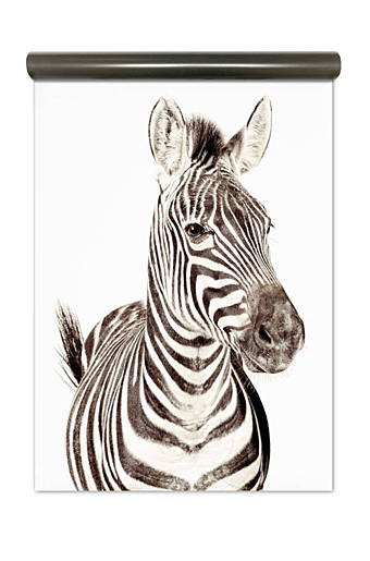 Magnet Wallpaper Stor Zebra