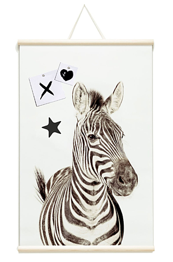 Magnet Poster - Ready to rool Zebra